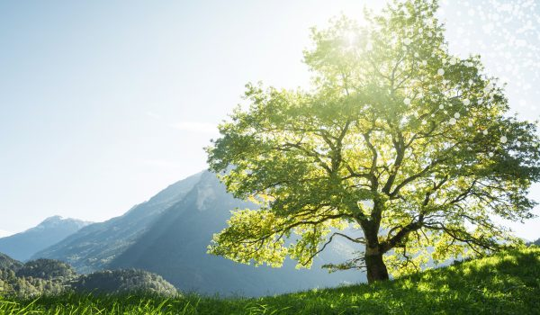 mountain-tree-header-v01